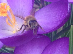 Bienen-stiften